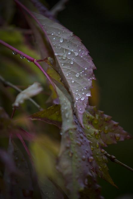 Blött, mörkt och lite dystert - en annan sida av hösten. Nu blev diet dags att gå in och tända några ljus och värma sig med en kopp kaffe
