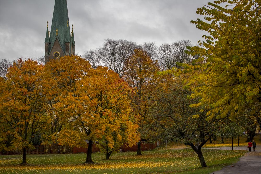 Domkyrkan i Linköping omgiven av höstens färger