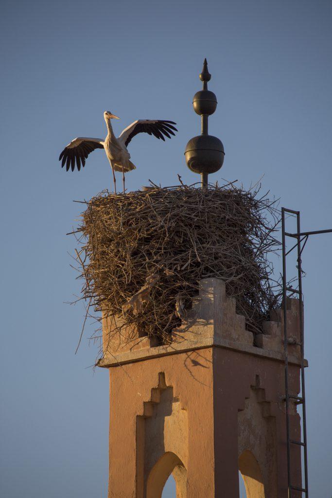 En stork dansar för oss på toppen av den närliggande minareten