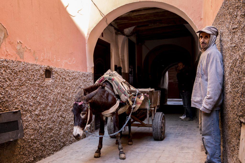 Dagen börjar med att vi nästan krockar med en åsnetransport när vi lämnar vår Riad