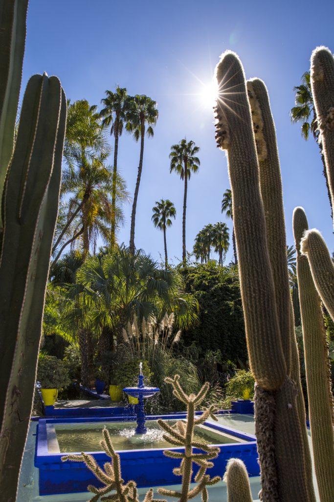 Jardín Majorelle med sina fantastiska kaktusodlingar