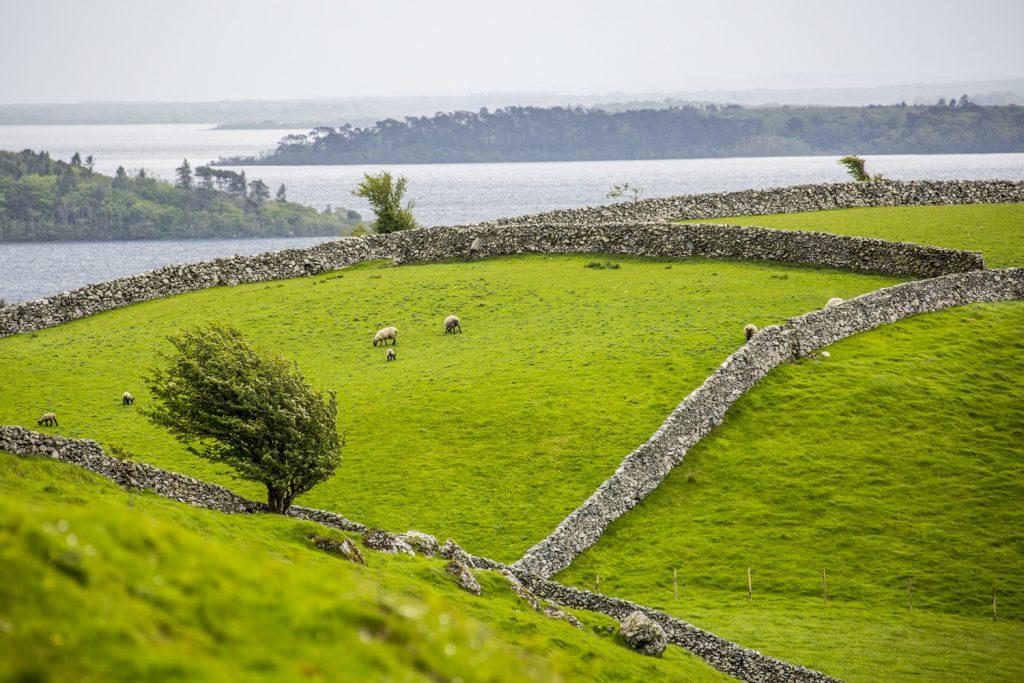Gröna kullar, med betande får omgivna av stenmurar. En vanlig syn på ön