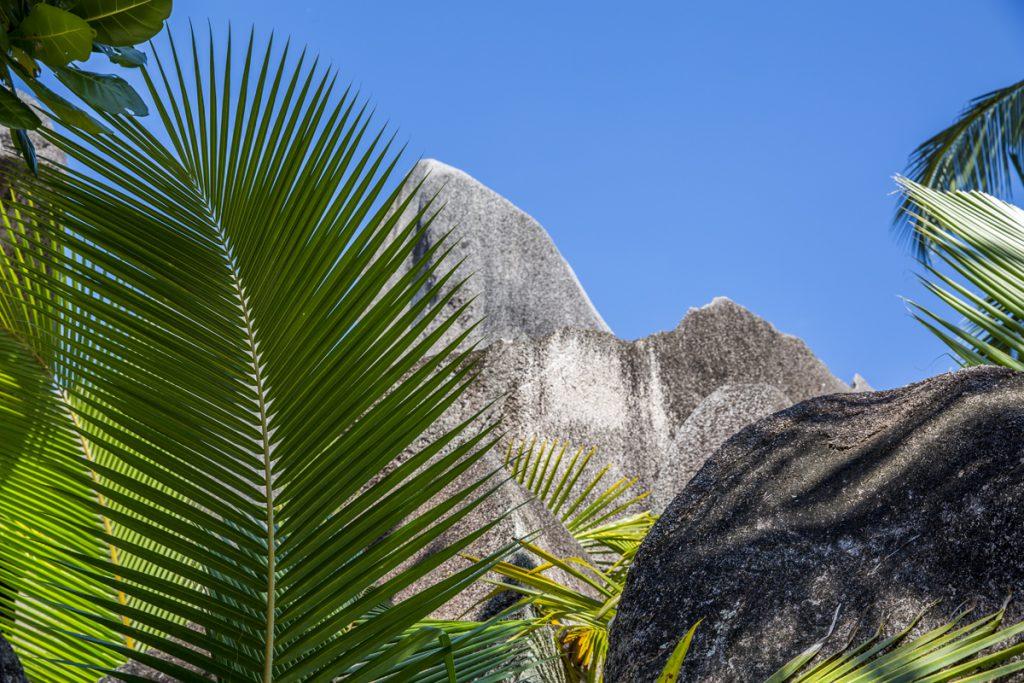 Vassa palmblad möter till synes mjuka granitklippor. En vanlig syn på Seychellerna