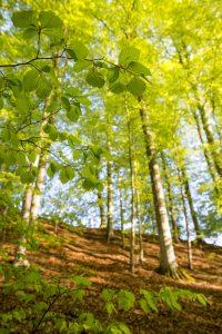 Trädens grenverk bildar en fin ram till stammarna i bakgrunden
