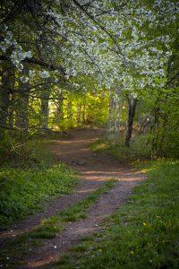 En väg mot ljuset, den måste vi följa...