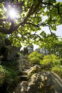Vägen till high cross går genom lummiga miljöer med vackra stenläggningar