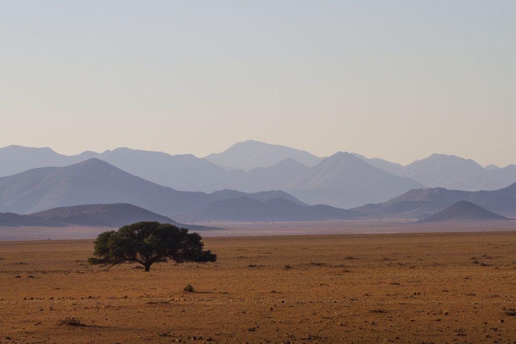 Blånande berg med ett ensamt träd i förgrunden - det blev några sådan bilder på resan