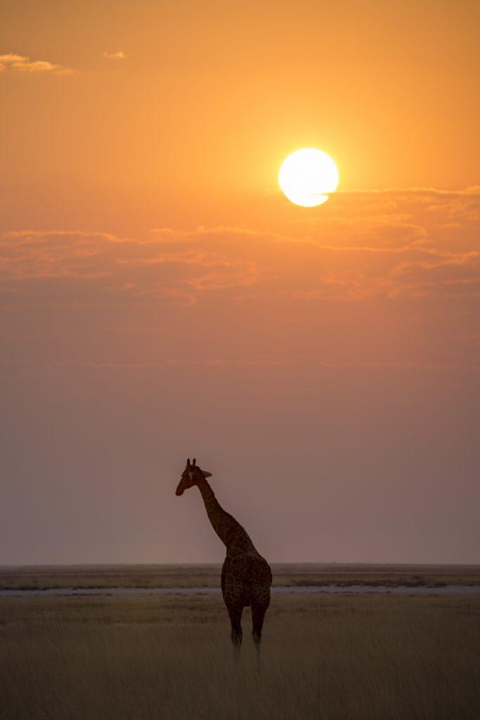 Och så fick jag äntligen min bild på en giraff i solnedgången och den dagen var fulländad.