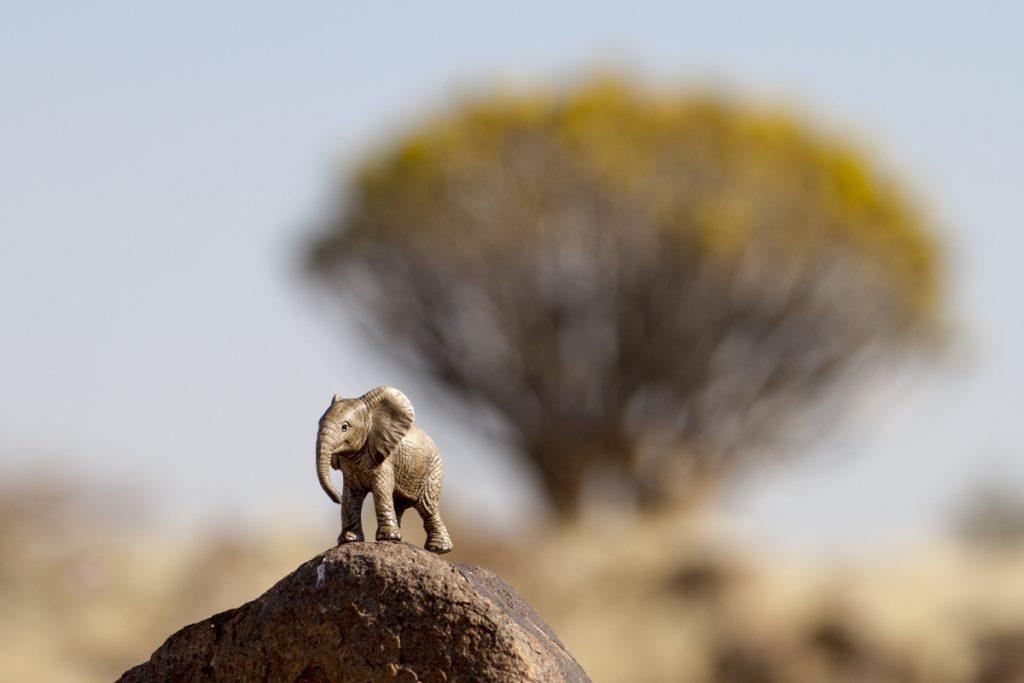 Elefanten på en klippa i Quiver Tree forest