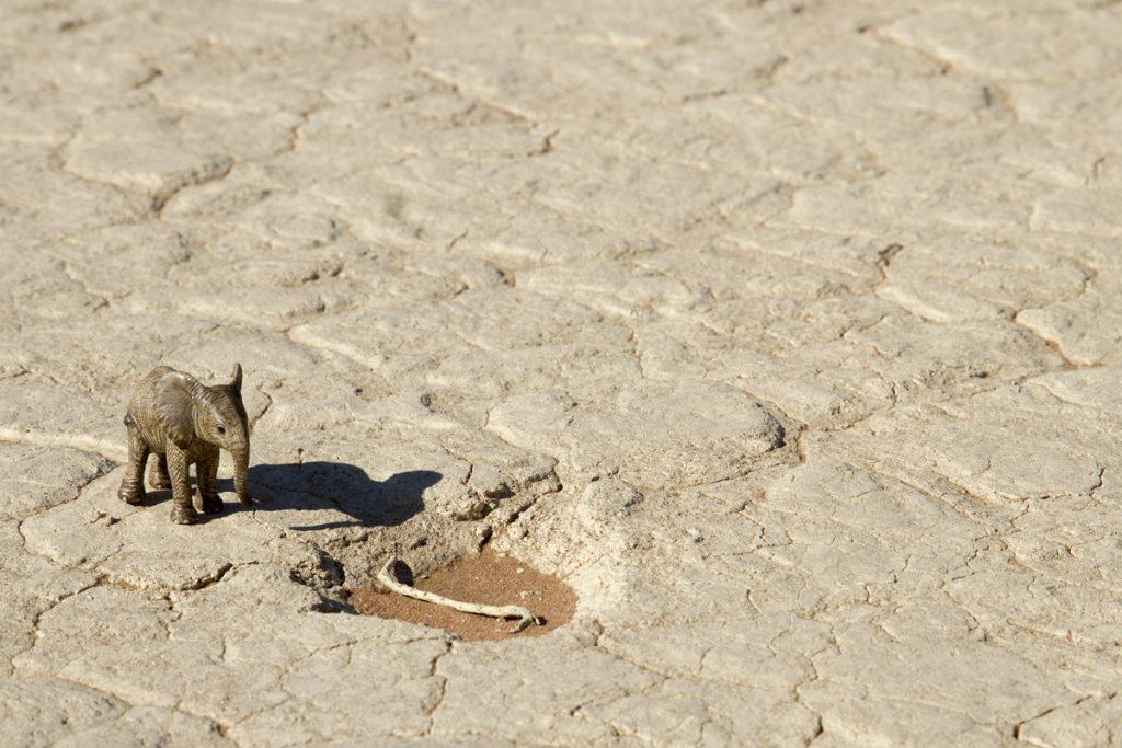 Besvikelse råder när elefanten ser att vattenhålet sinat...