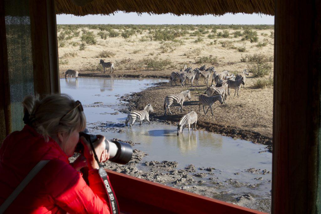 Ylva fotograferar fåglar och zebror från gömslet i Olifantsrus