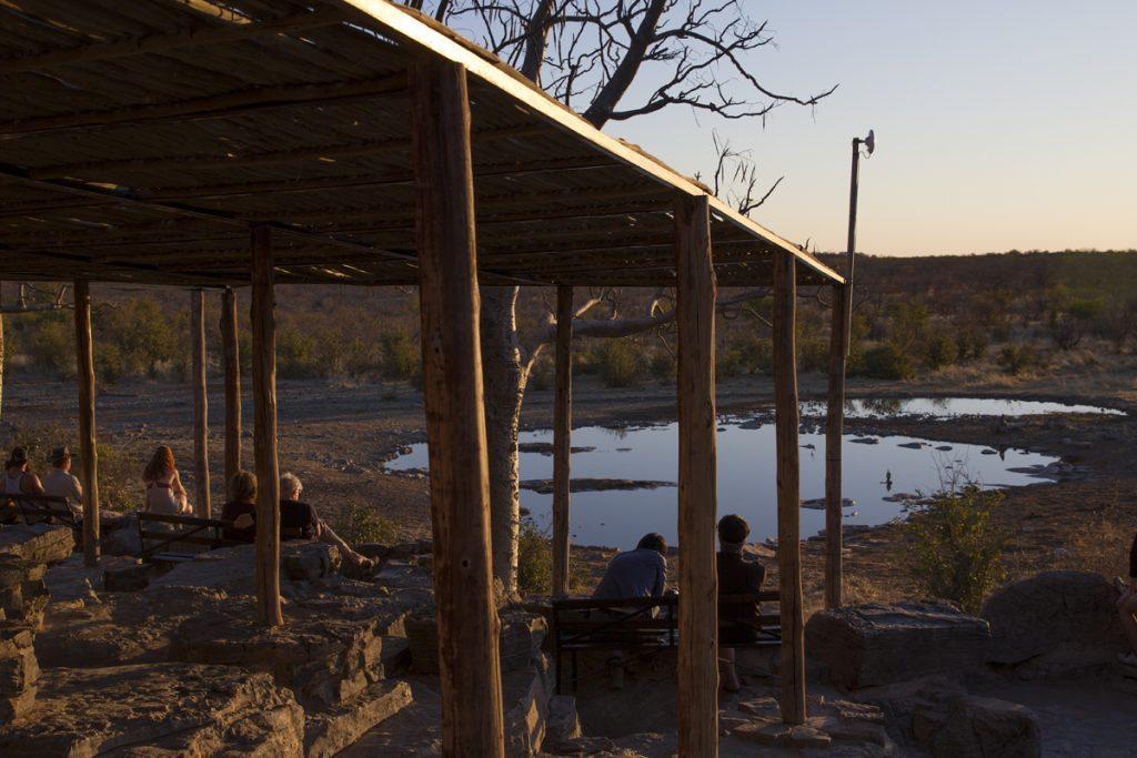 Flera av camperna har sina egna vattenhål. I Halali kan man bekvämt sitta och titta på djuren dygnet runt