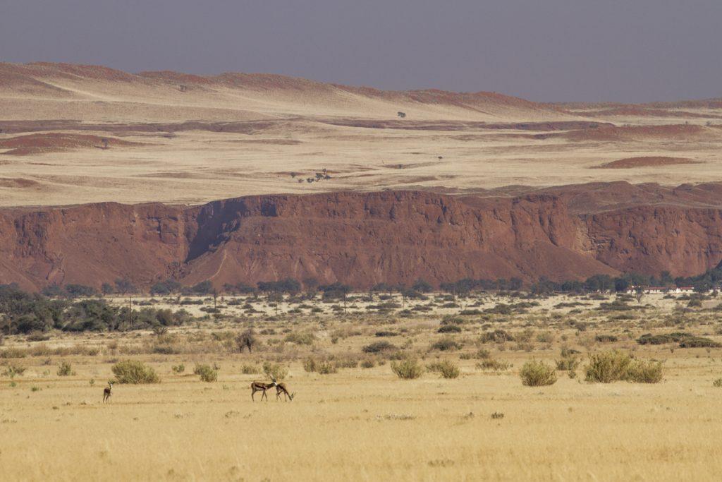 Utöver de springbock som förgyller landskapet över hela Namibia, ser vi idag oryx, zebror och babianer på fälten.