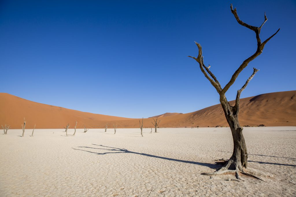Namibia desert! Spectacular landscape in Sossusvlei and Dead Vlei in Namibia