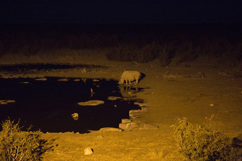 Tystad och stillhet råder bland människorna som sitter och beundrar denna noshörning vid vattenhålet i Halali