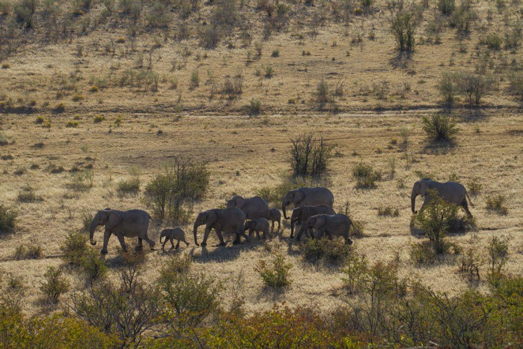 Äntligen får vi se elefanter. En flock vandrar förbi precis nedanför vår altan.