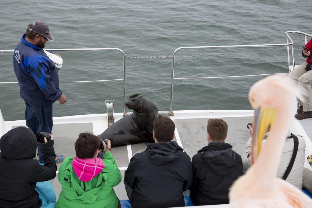 Vi får bekanta oss med en öronsäl och några pelikaner som blir väl omhändertagna på båten.