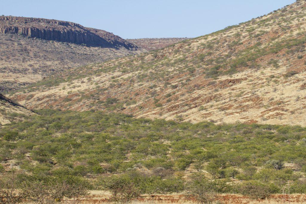 Ser du girafferna mellan träden? Det gjorde jag och ställde mig på bromsen.