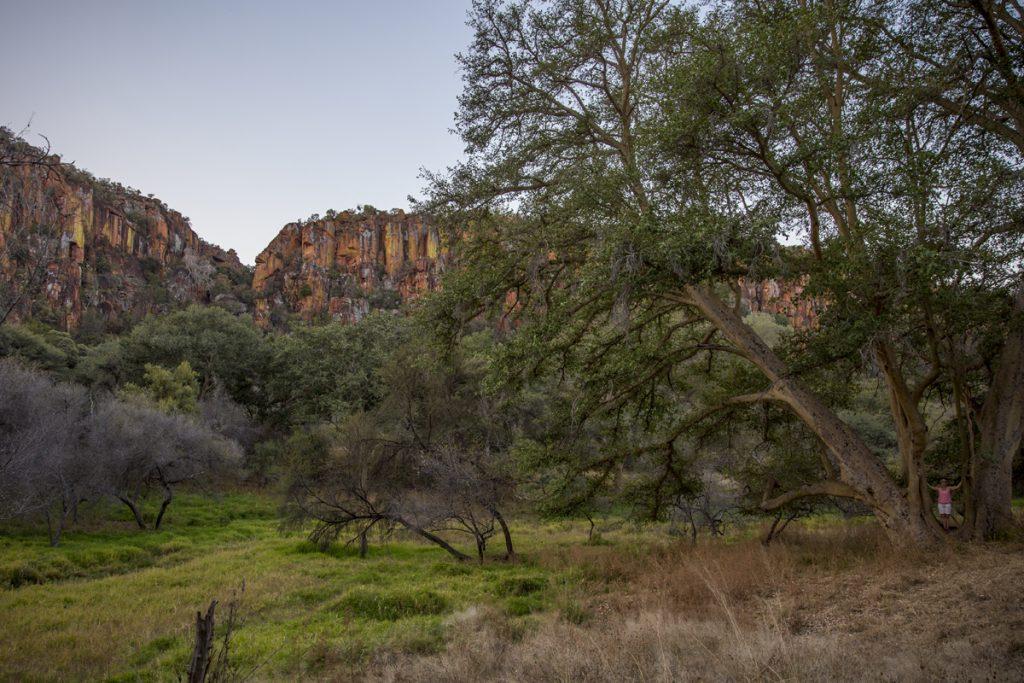 Makalös häftig miljö med gigantiska träd omgivna av Waterbergs färgglada sandstensklippor. Hittar du Ylva bland träden?