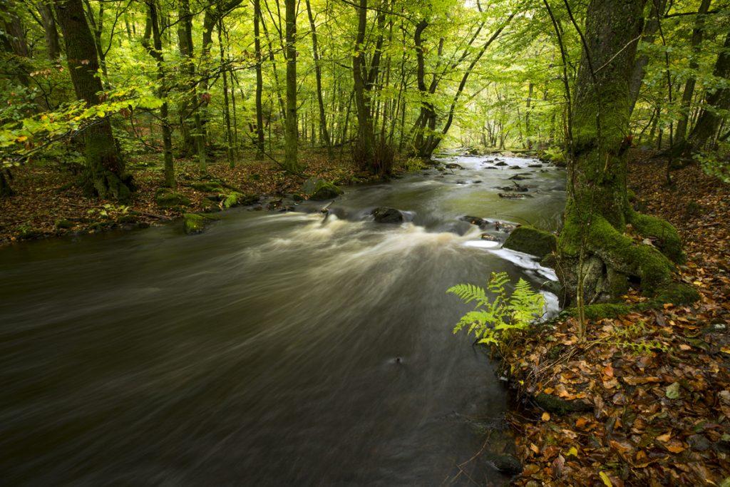 Fjolårets gamla mörka löv bildar en stämningsfull matta och en kontrast till de gröngula bladen där det lilla ljus som finns tenn idag sipprar lite försiktigt genom. Bäckens mörka vatten höjer stämningen ytterligare