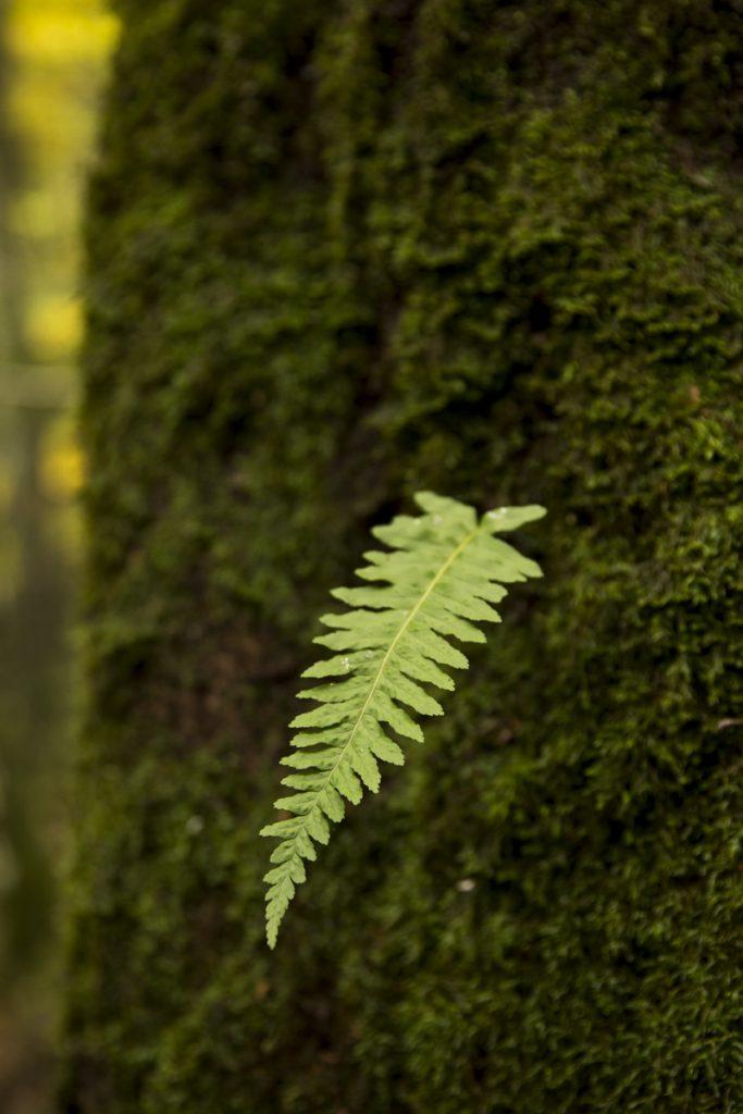 Det kan växa vad som helt på de mossbeklädda träden