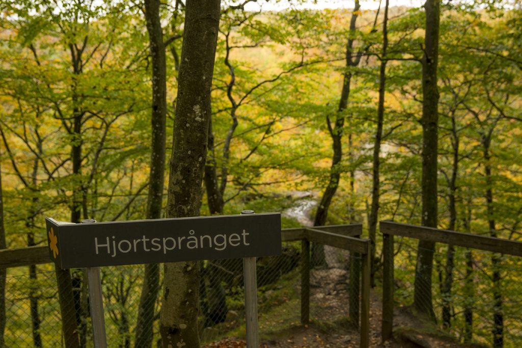 Hjortsprånget, en smal klipphylla med fin utsikt över dalen. Här jagade man hjortar ut för stupet redan på stenåldern