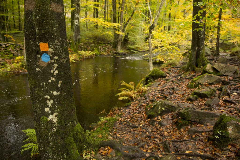 Hjortsprångrundan går flera km nere i Skäralidsdalen. På sina ställen lite trixigt att ta sig fram på hala stena och rötter men väldigt vackert.