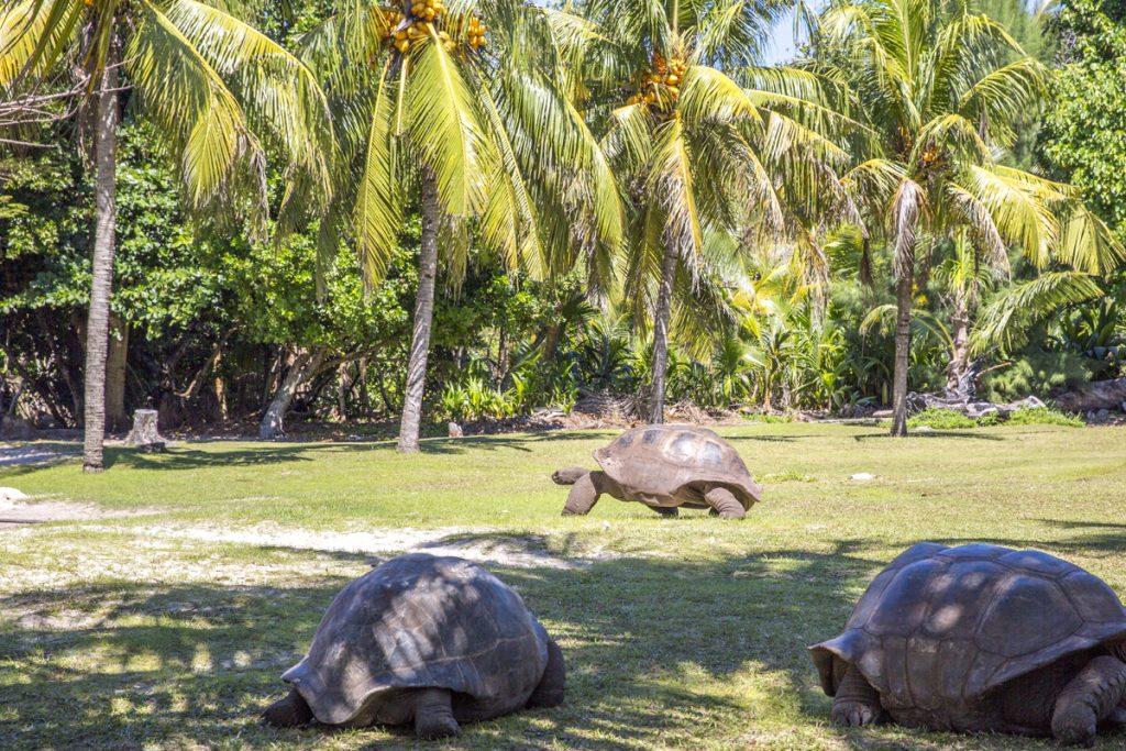 Ett besök på Curieuse är ett måste om man besöker de Seychelliska öarna