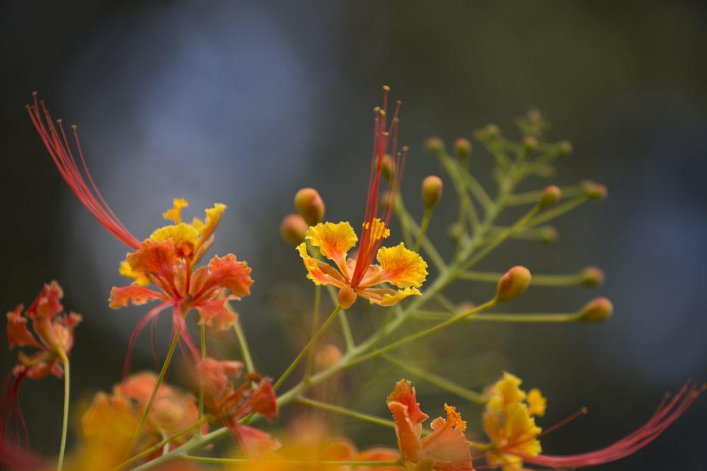 """Många färgglada blommor i """"vår trädgård"""""""