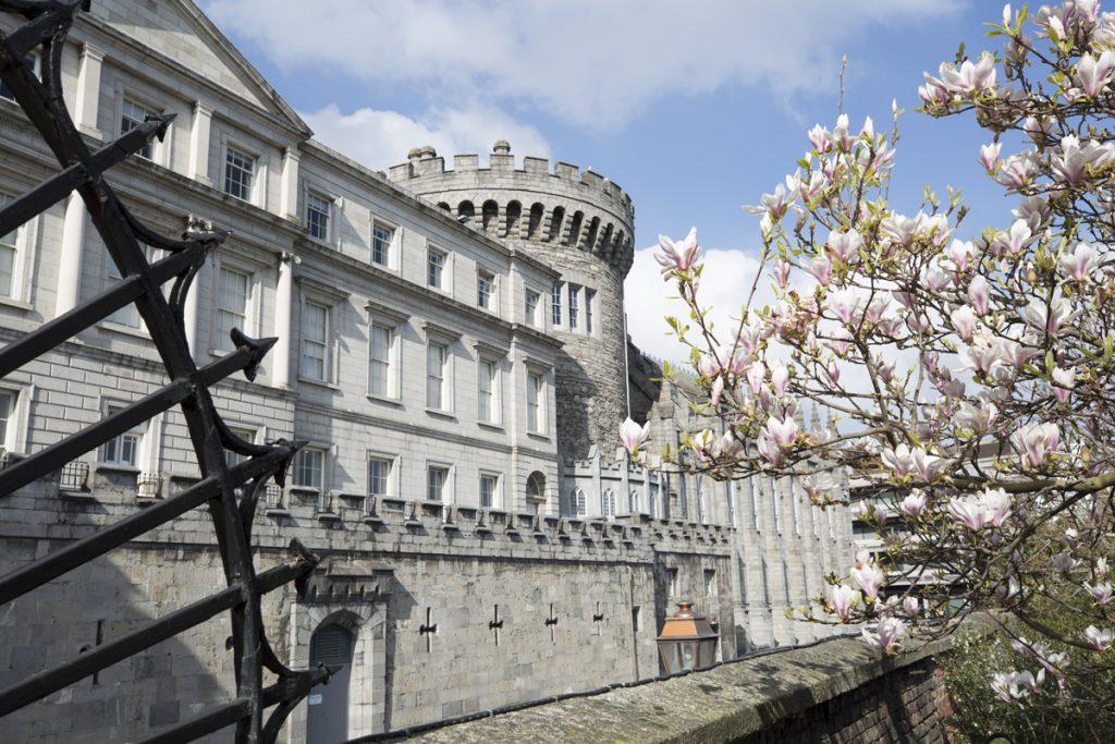 Vår i Dublin. Magnolian bjuder på blomsterprakt framför slottet