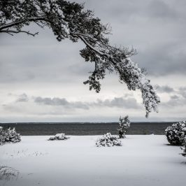 Sen vinter på Öland