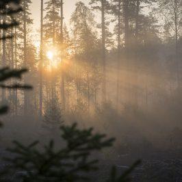 Vårmorgon i dimma