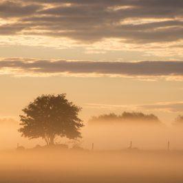 Dimmig augustimorgon över Östgötaslätten