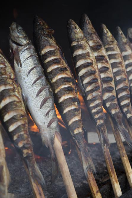 Rökt sik på Sikfesten vid Kukkolaforsen