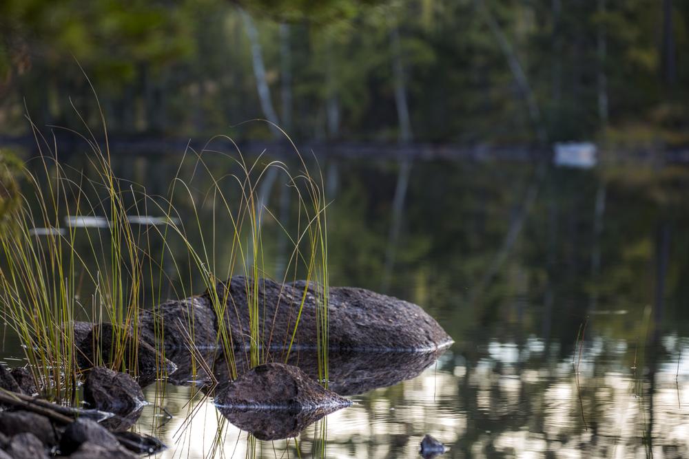 Vasstrå som pryder vattenbrynet