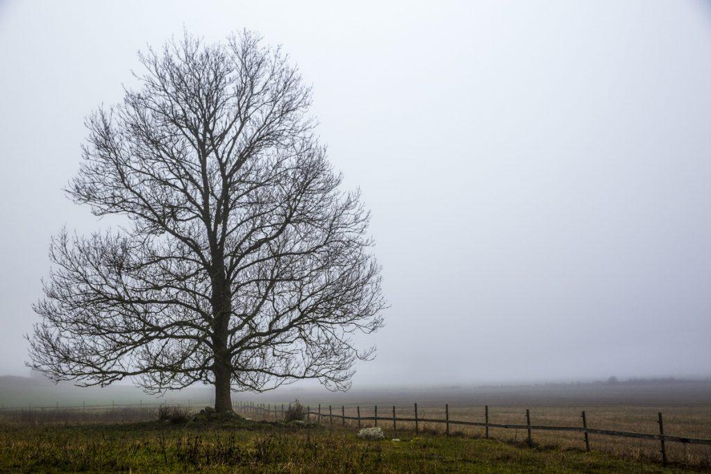 Nakna träd blir väldigt vackra när man ser grenarna breda ut sig