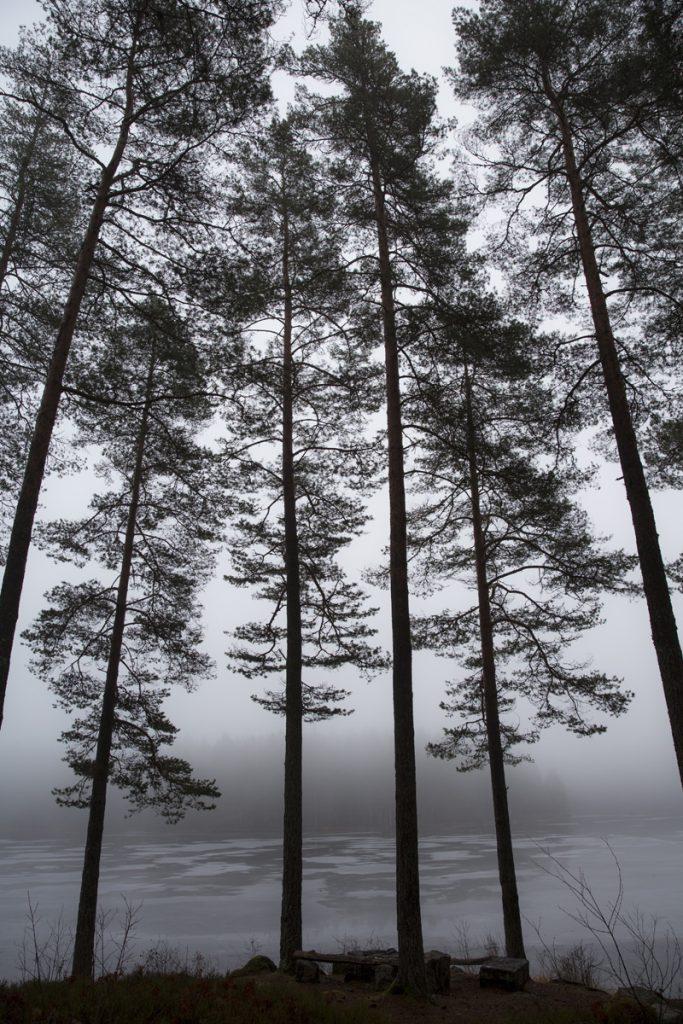 Tallar i dimma