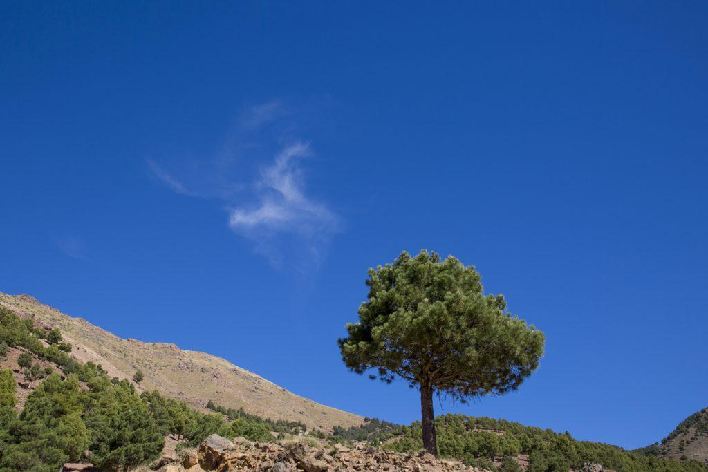 Träd mot en nästan klarblå himmel