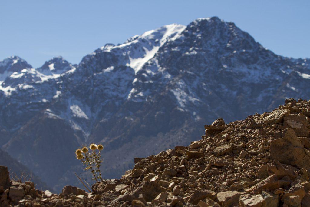 Atlasbergen med sina snöklädda toppar i bakgrunden hela vandringen.