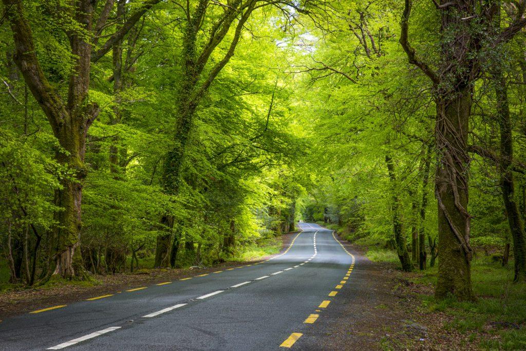 Vägarna på Irland är ofta vackert inlindade i grönska