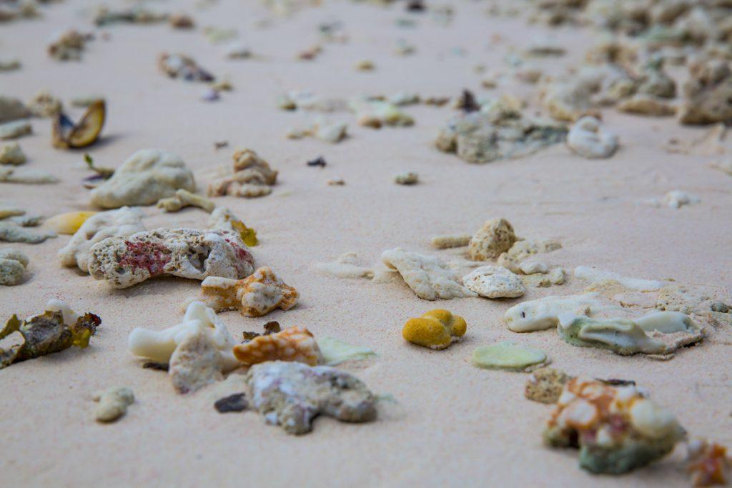 Den här stranden är full med läckerheter, men inga människor