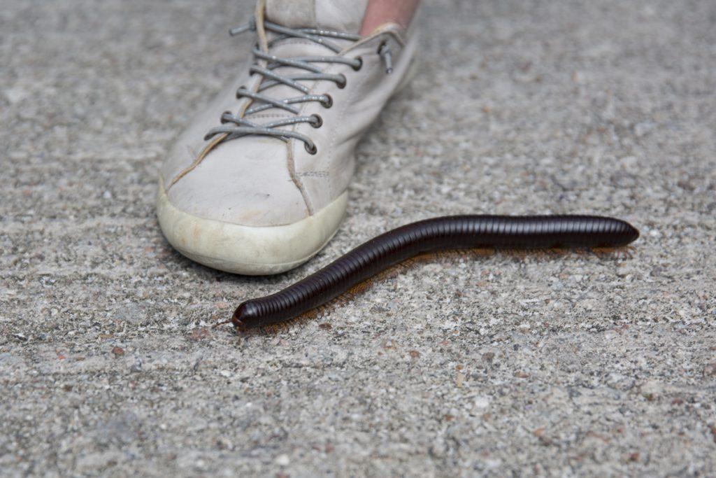Vi träffade en kompis med många fötter