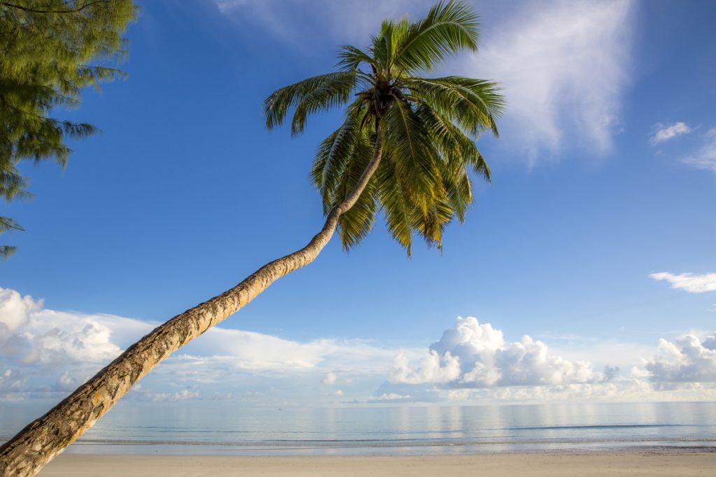 Vår palm på stranden Anse Volbert. Utsikten från vårt boende under sju dagar.