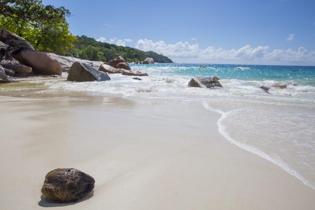En kokosnöt som har spolats upp förgyller Anse Lazio