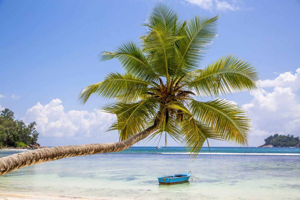 Ännu en paradisstrand. Man undrar ju om palmen tillhör båtägaren