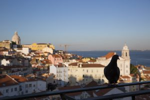 A dove in Lisbon