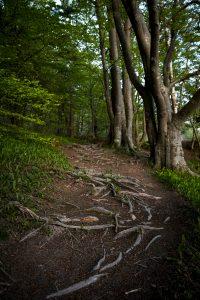 Rötterna bildar häftiga mönster som drar betraktaren in i bilden