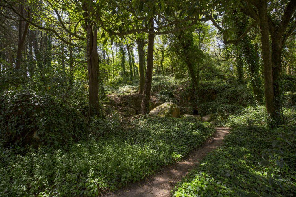 Vackra frodiga miljöer i parken kring slottet Pena