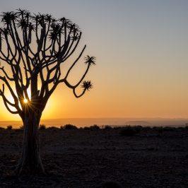 Resan till Namibia – 1