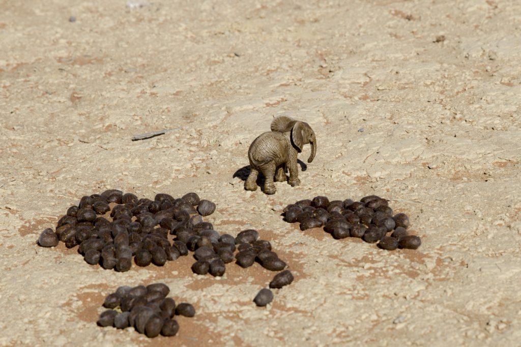 Elefanten efter toalettbesök